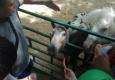 В контактном зоопарке